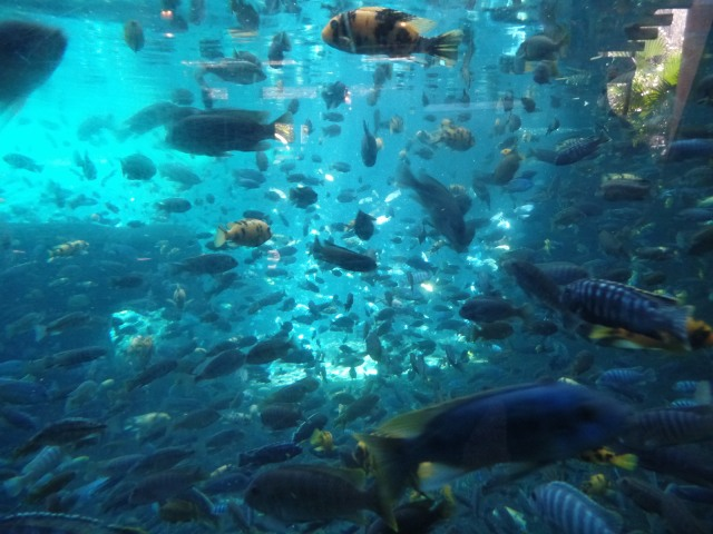 Fish tank at Animal Kingdom in Disney World