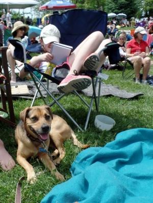 Dog at Dylan Fest