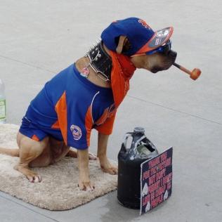 Mets dog