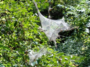 Spiders on the trail