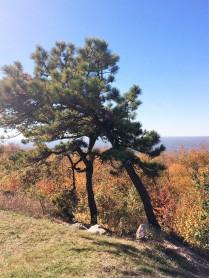 High Point tree