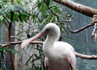 Bronx Zoo bird