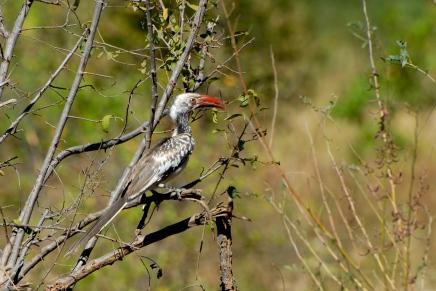 Zimbabwe bird