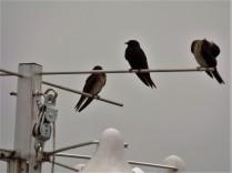 Birds at Wetlands Institute