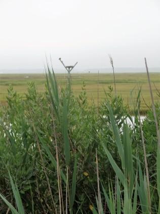 Osprey nest