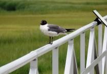 Bird at Wetlands Institute