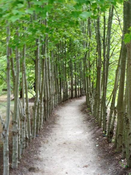 Bamboo-lined walkway