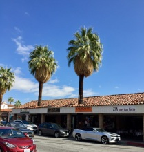 Downtown Palm trees