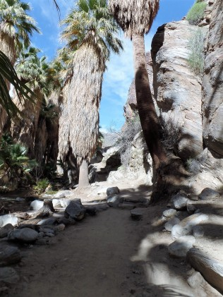 hiking trail in Palm Springs
