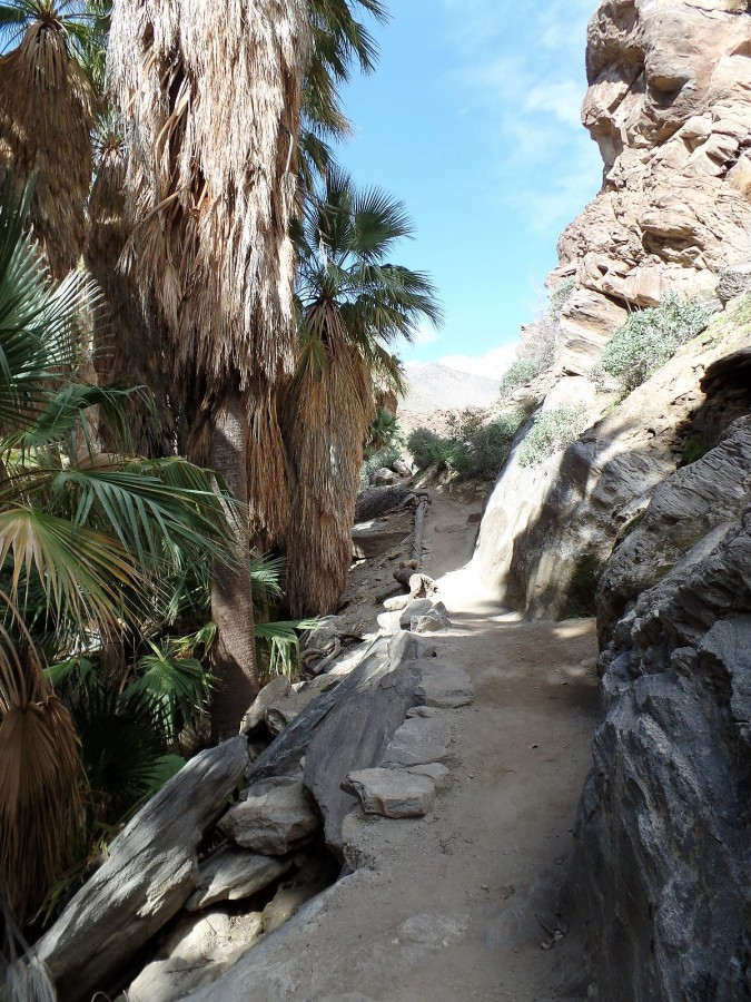 hiking trail at Indian Canyons