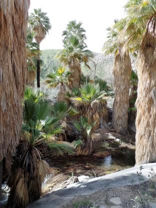 Growing green in the desert