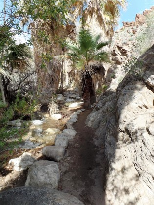 Desert mountain stream