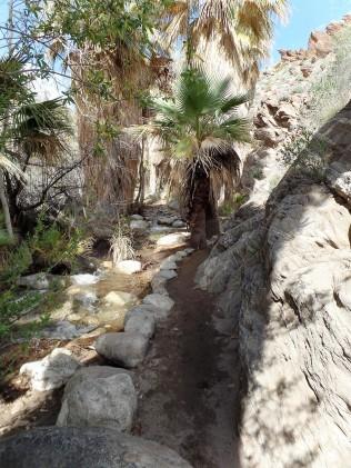 Desert mountain stream