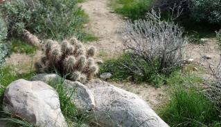 Desert flora and fauna