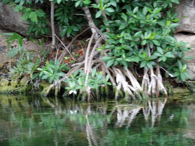 Mayakoba canal