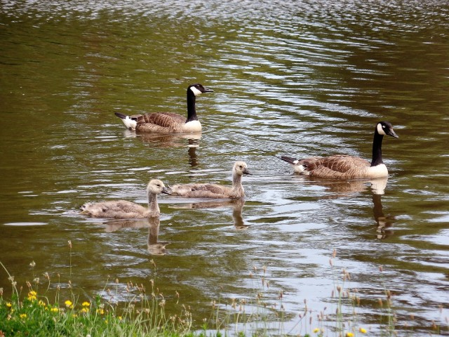 Edgemont Park pond
