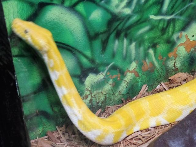Cape May zoo snake