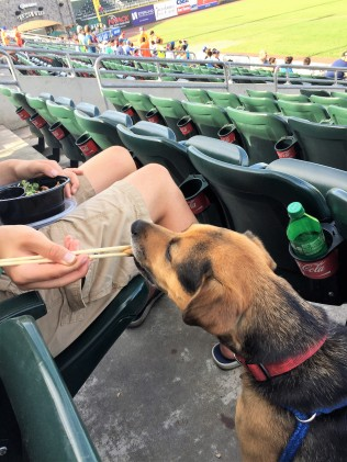 Pepper eating at ballpark