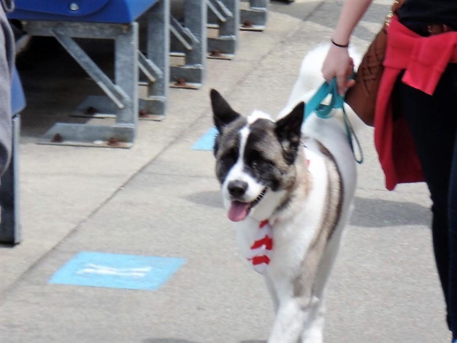 baseball dog