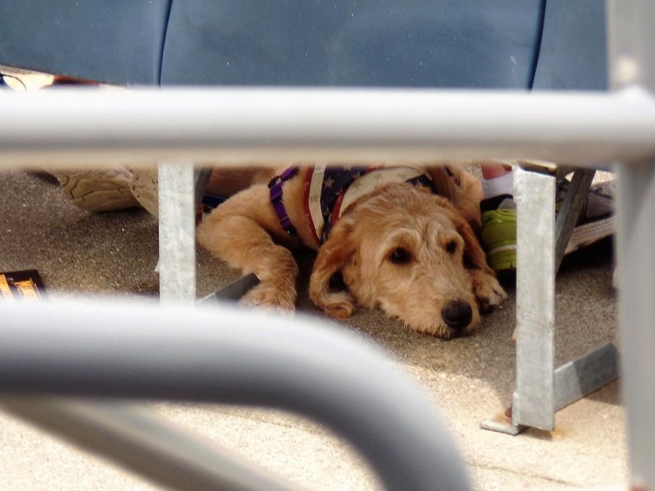 Skylands Park dog