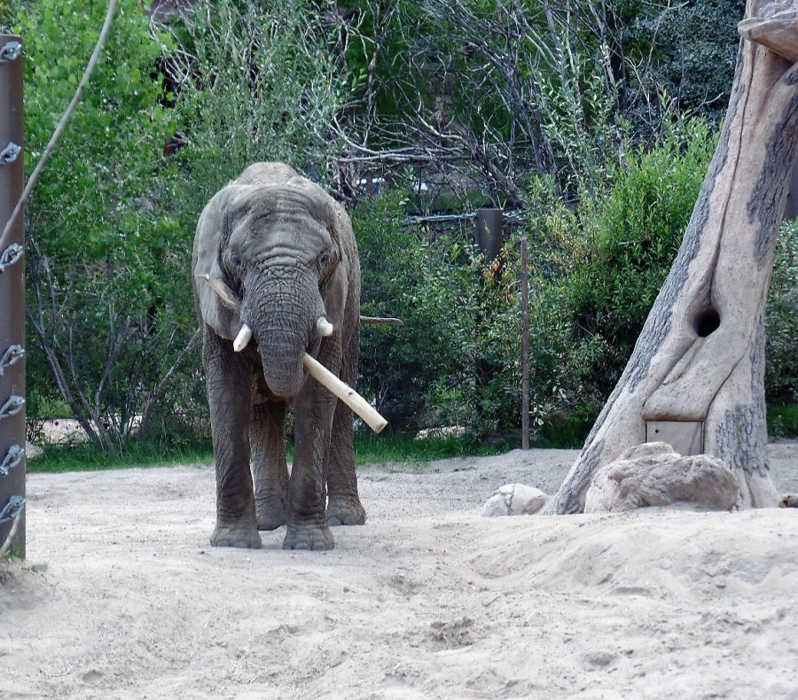 elephant with stick