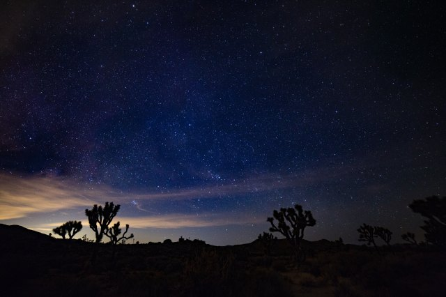 the stars at Joshua Tree