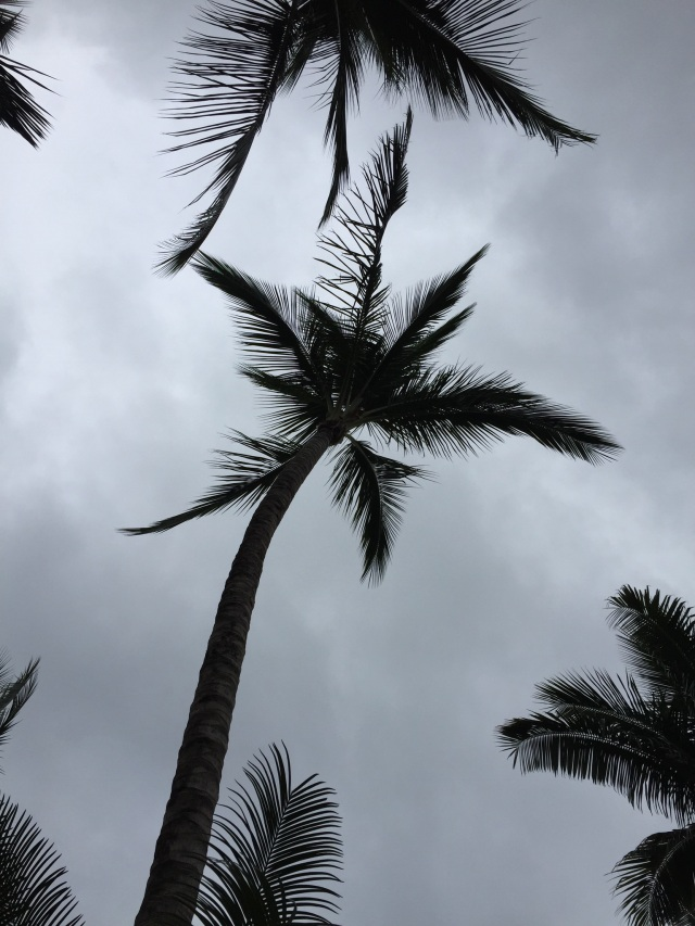 Palm tree, gray skies