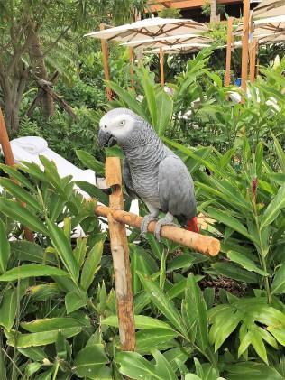 Four Season rescue bird