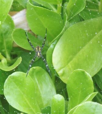 Spider in Haleakala National Park