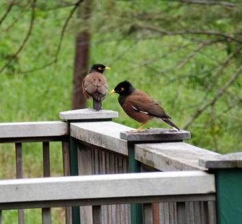 Birds in Hana
