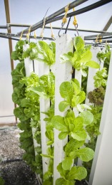 indoor vegetables farming