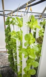 indoor vegetables farming