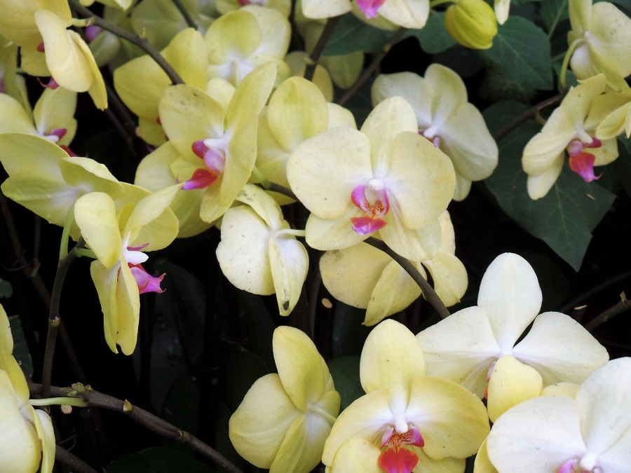 NYBG flowers
