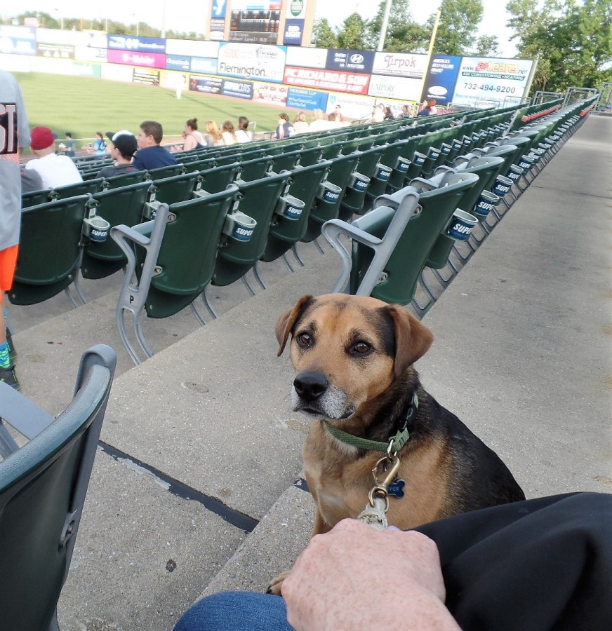 Bark in the Park night in Bridgewater, N.J.