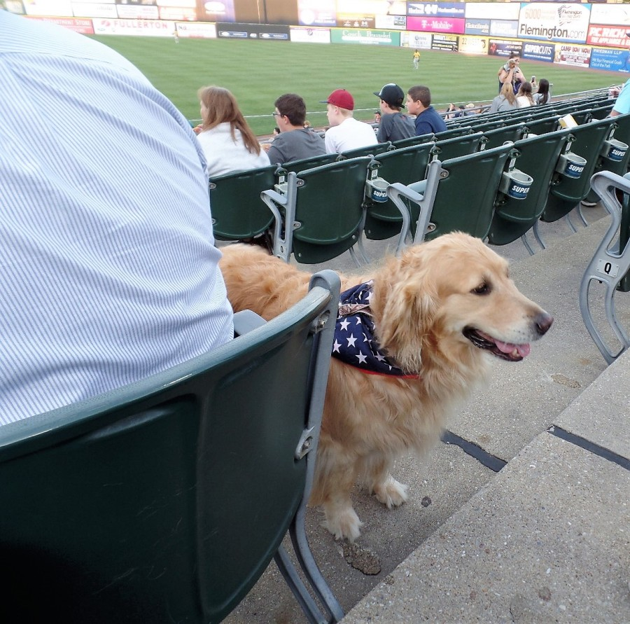 Bark in the Park night at Somerset Patriots game