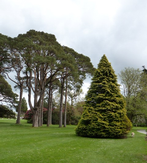 Muckross estate grounds
