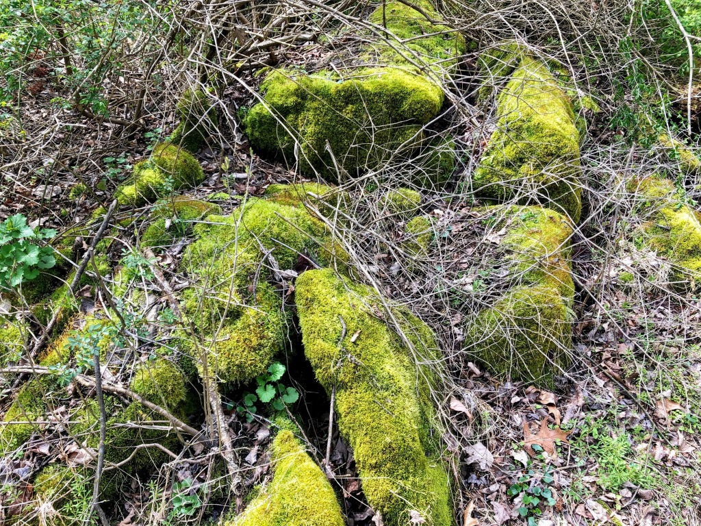 moss on rocks at Goosepond