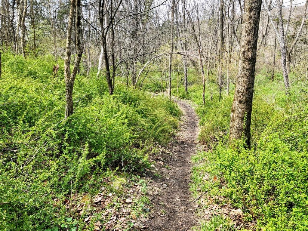 Goosepond trail
