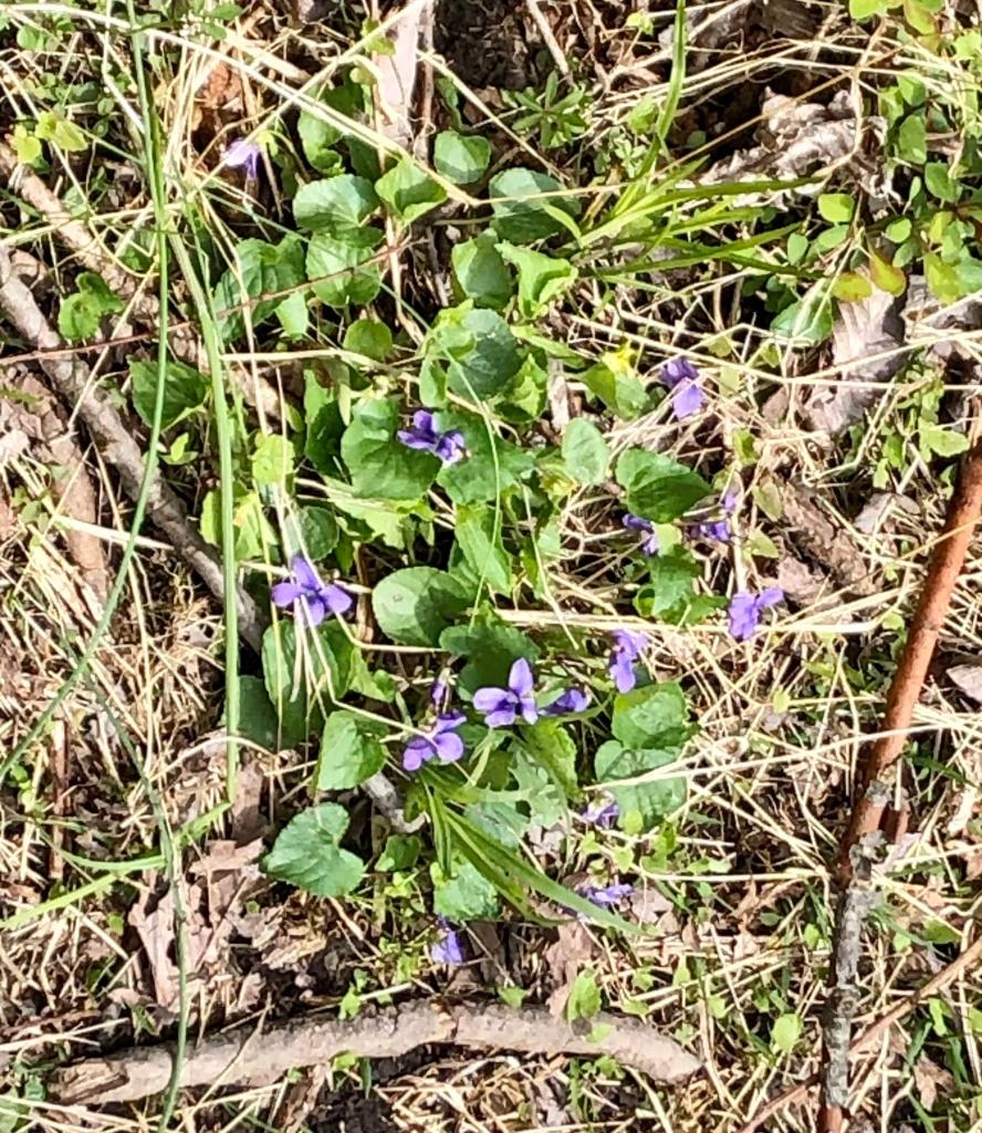 wildflowers at Goosepond
