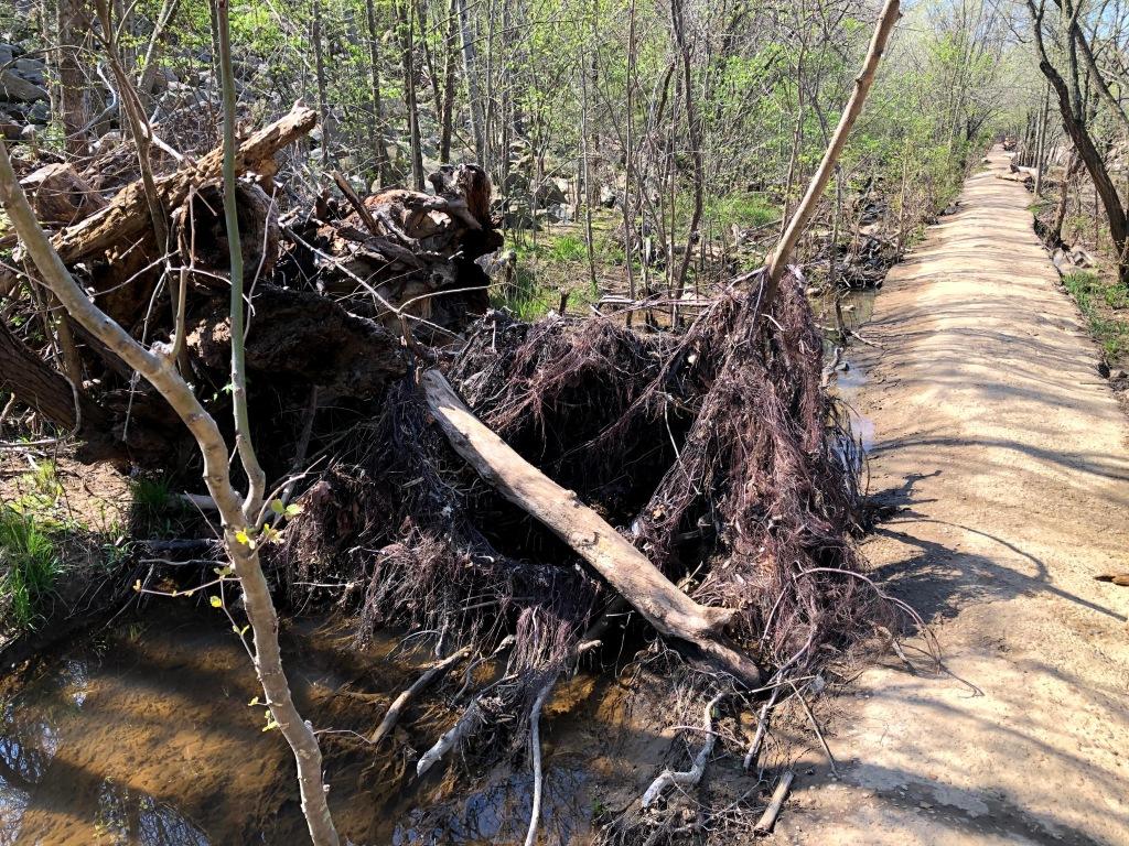 Belle Isle hiking trail