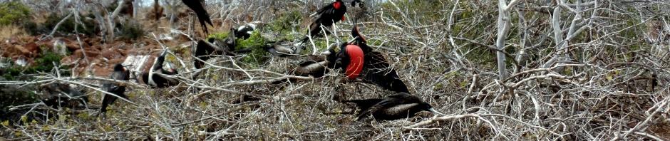 Galsapagos birds